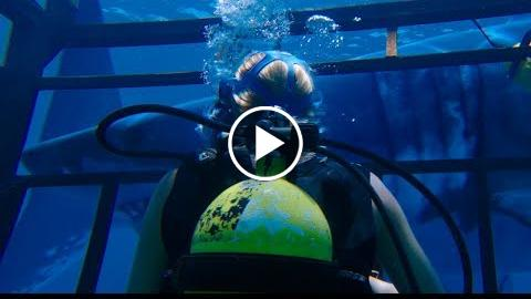 47 METRES DOWN TRAILER –  MANDY MOORE, CLAIRE HOLT, SHARKS!!!