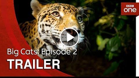 Big Cats: Episode 2  Trailer – BBC One
