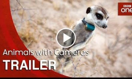 Animals with Cameras: Trailer – BBC One