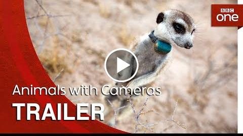 Animals with Cameras: Trailer – BBC One