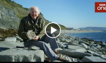 David Attenborough goes fossil hunting – Attenborough and the Sea Dragon – BBC One