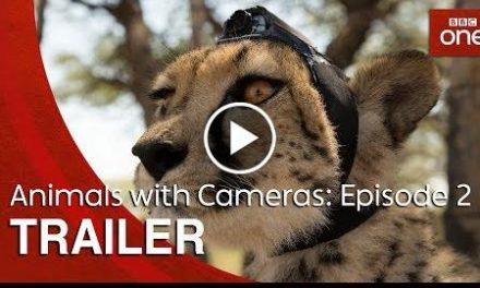 Animals with Cameras: Episode 2  Trailer – BBC One