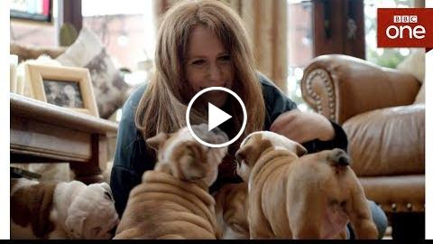 Can surgery help Betsy the Bulldog with her breathing? – Saving the British Bulldog – BBC One