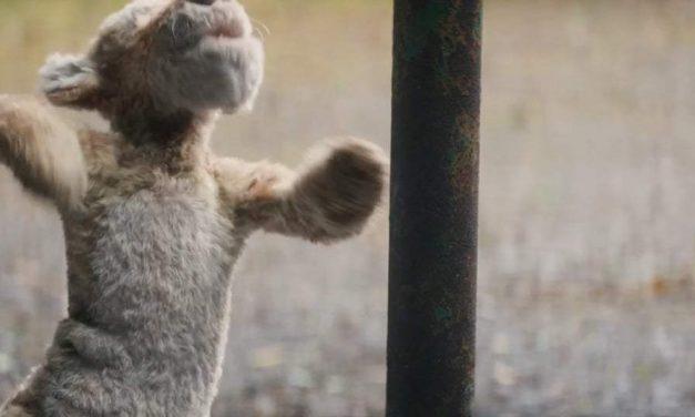 Christopher Robin: Trailer