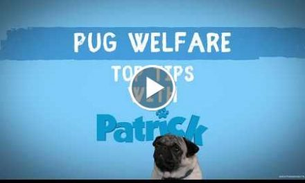 PATRICK | Pug Welfare | Official UK