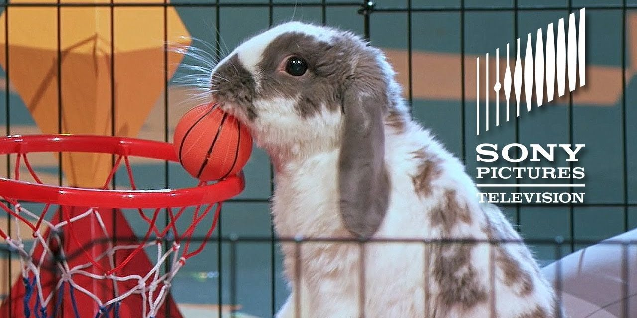 Bini The Bunny – The Gong Show