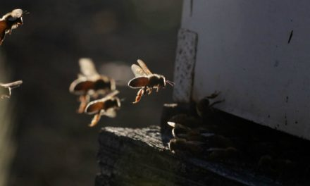 This Amazing True-Crime Story Involves Bees, Thieves, and Almonds