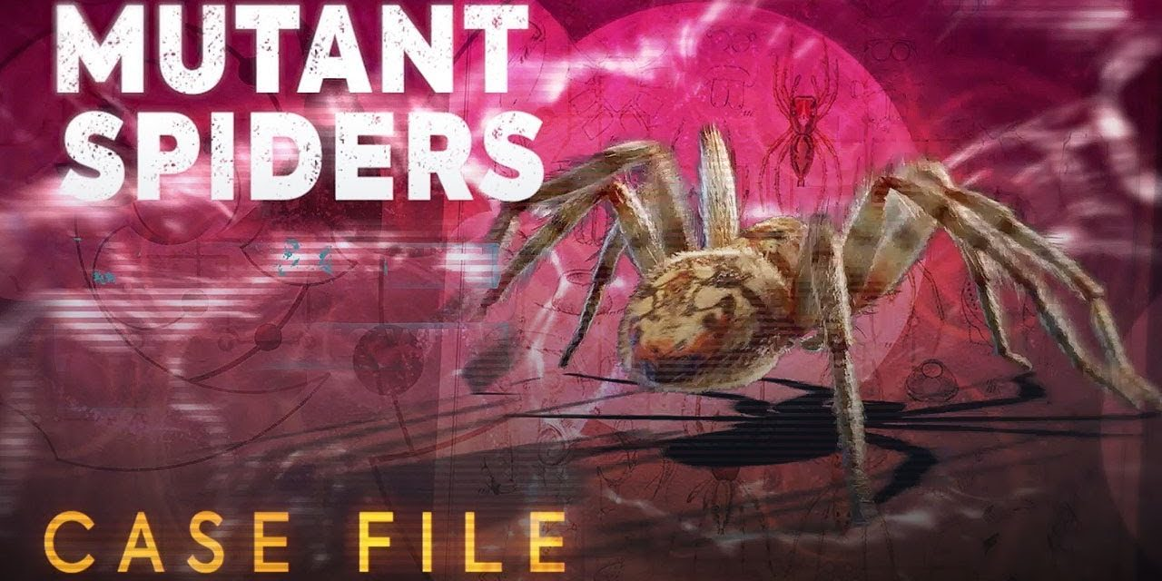Mutant Spiders   Case File   Doctor Who: Series 11