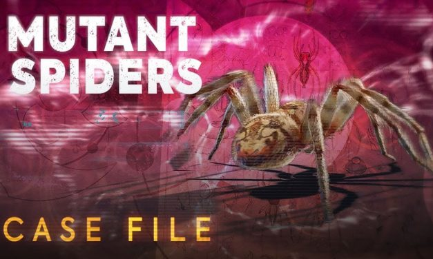 Mutant Spiders | Case File | Doctor Who: Series 11