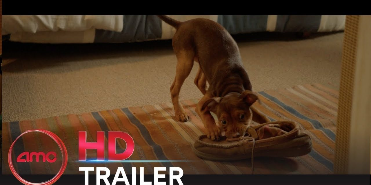 a dog movie 2019 A DOGS WAY HOME Final Trailer Bryce Dallas Howard