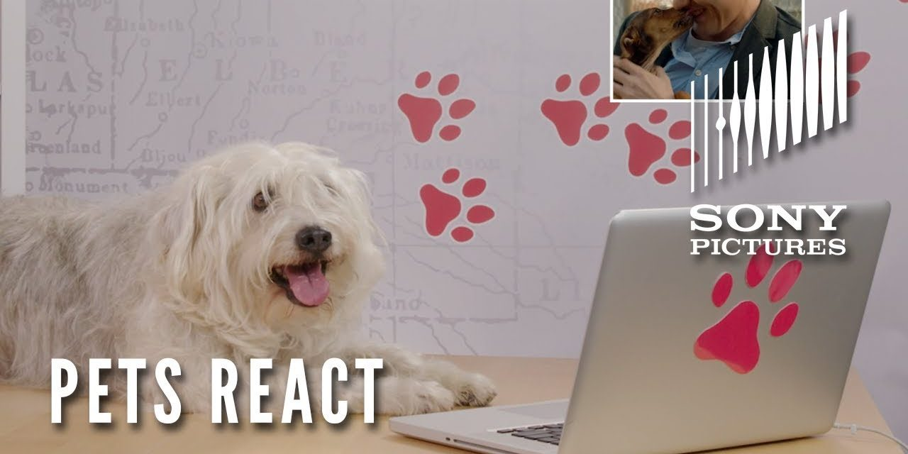 A DOG'S WAY HOME – Dog's and Cat's React (In Theaters January 11)
