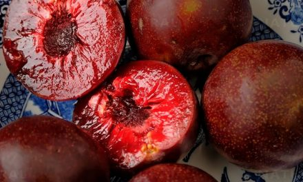 Are Plums Good For You? 8 Reasons To Eat Plums Everyday