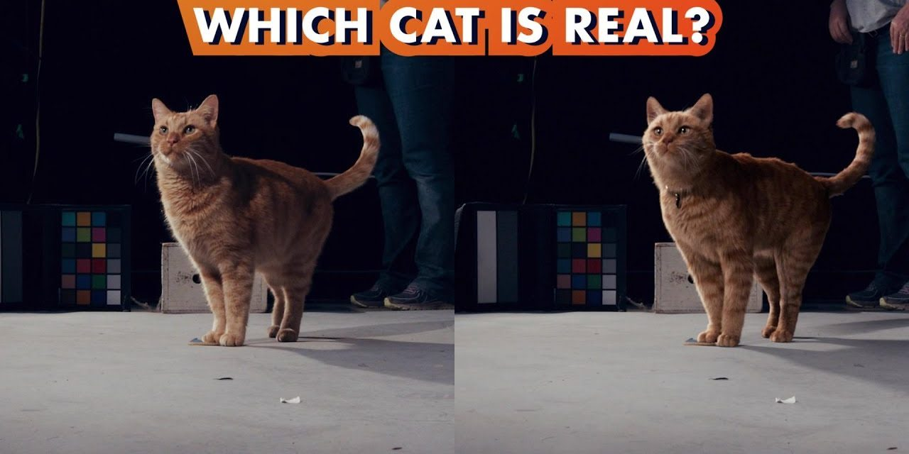 Which Goose the Cat is Real?   Making Marvel Studios' Captain Marvel