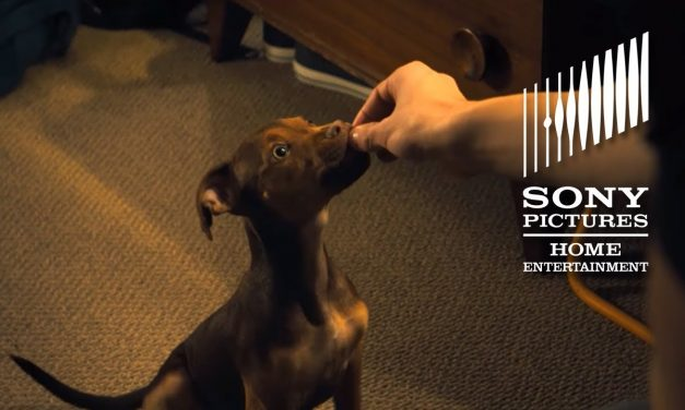 A DOG'S WAY HOME: Top 10 Cutest Moments – Now on Digital!