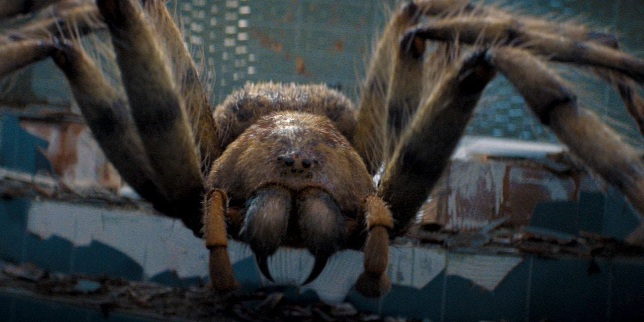 Giant Spider Attack!   Arachnids in the UK   Doctor Who