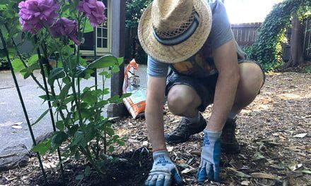 The best gardening apps help you watch your garden grow