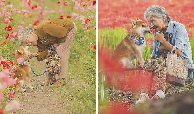 Grandson Captures The Heartwarming Bond Between His Grandma And Her Shiba Inu In 30 Beautiful Pics