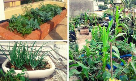 Nashik Man Uses Kitchen Waste, Grows 35 Organic Veggies In 3-Tier Terrace Farm!