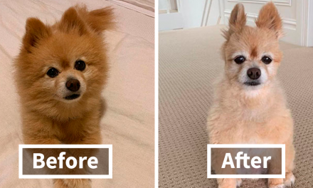52 Times Quarantined People Tried Grooming Their Dogs And Realized What The Professionals Are For