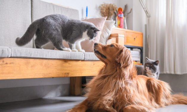 12 Cat Breeds That Get Along with Dogs