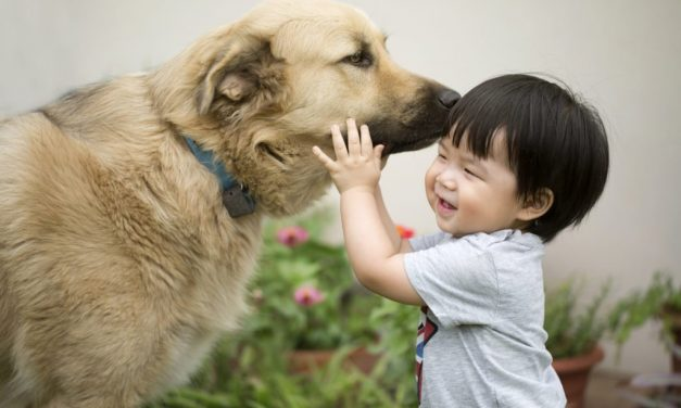 30 Adorable Photos of Dogs and Babies Playing Together