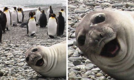 30 Amusing Photos Of Seals Who Can't Contain Their Laughter