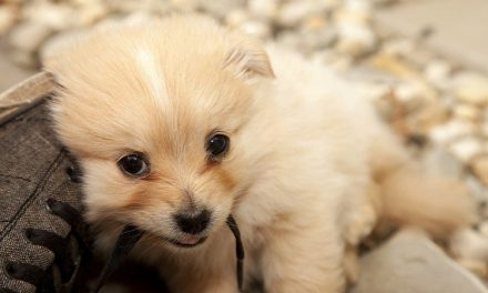 Bringing a New Puppy Home? Here's What You Need to Know.