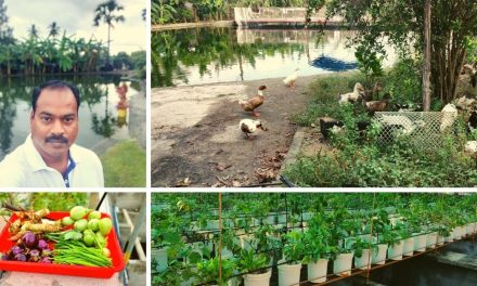 Engineer Returns from US to Start Aquaponics Farm, Grows 4 Tonnes of Veggies/Month