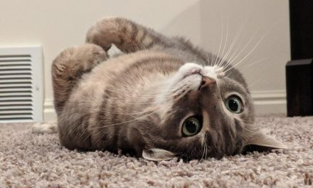 The purrfect Cyber Monday deals for your kitty