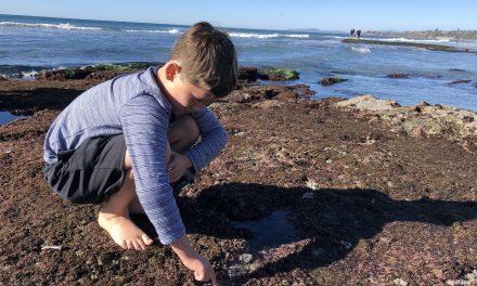 See Anemones! 8 Best Tide Pools in San Diego