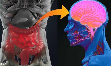 Link Between Alzheimer's and Gut Is Confirmed
