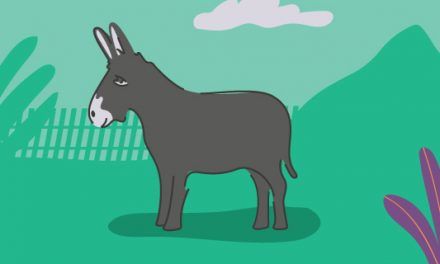 The Meaning of a Donkey Sighting