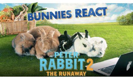 PETER RABBIT 2: THE RUNAWAY – Bunnies React