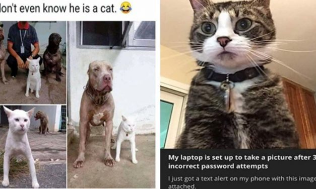 Caturday Meme Madness: Fresh And Purrfect Cat Memes
