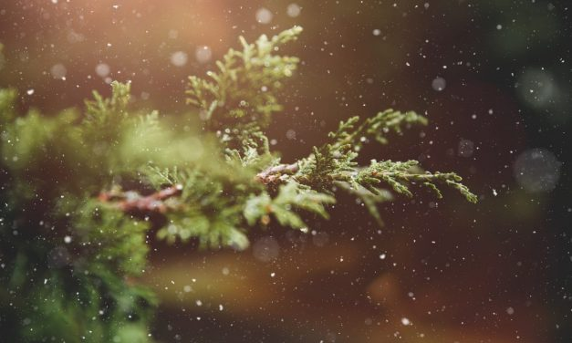 How to Protect Your Trees and Shrubs for Winter